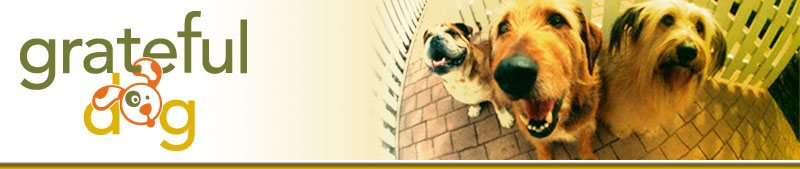 Grateful Dog Daycare, Dog Boarding, and Dog Grooming, Sacramento California