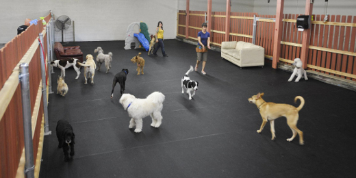 Doggy daycare business plan